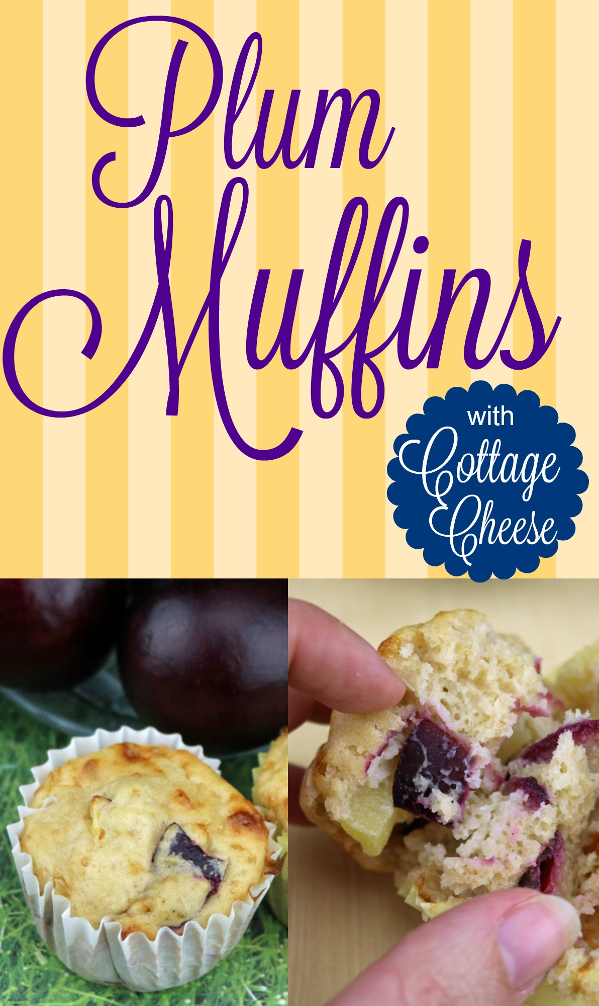 Plum Cottage Cheese Muffins {Recipe}