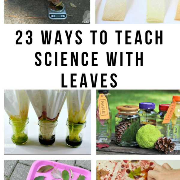 23 Ways to Teach Science with Leaves