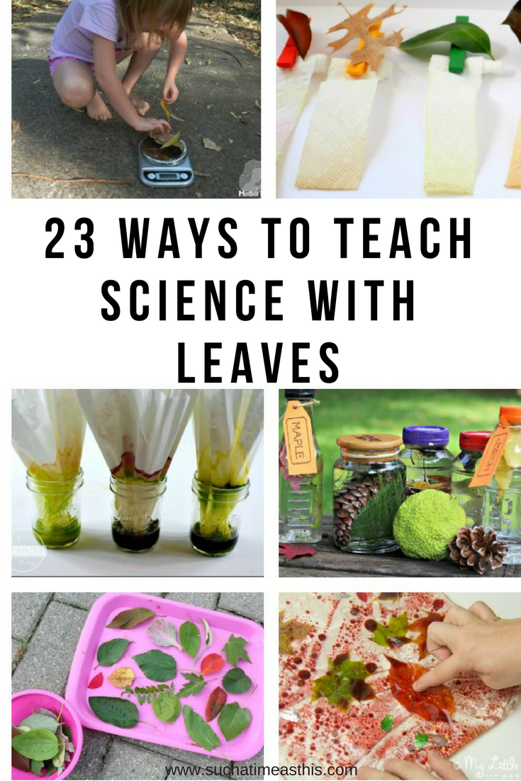 teach science with leaves